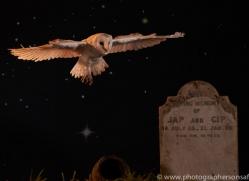 barn-owl-copyright-photographers-on-safari-com-8856