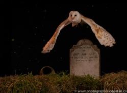 barn-owl-copyright-photographers-on-safari-com-8859