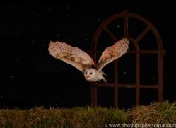 barn-owl-copyright-photographers-on-safari-com-8860