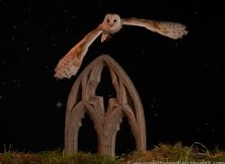 barn-owl-copyright-photographers-on-safari-com-8863