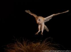 barn-owl-copyright-photographers-on-safari-com-8683
