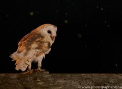 barn-owl-copyright-photographers-on-safari-com-8695
