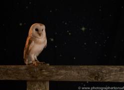 barn-owl-copyright-photographers-on-safari-com-8696