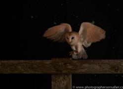 barn-owl-copyright-photographers-on-safari-com-8698