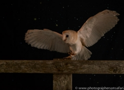 barn-owl-copyright-photographers-on-safari-com-8699