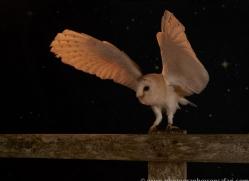 barn-owl-copyright-photographers-on-safari-com-8703