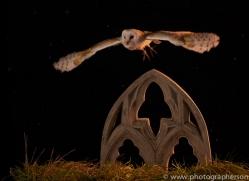 barn-owl-copyright-photographers-on-safari-com-8838