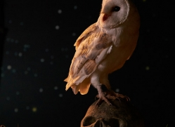 barn-owl-copyright-photographers-on-safari-com-8841