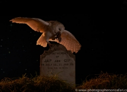 barn-owl-copyright-photographers-on-safari-com-8845