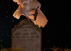 barn-owl-copyright-photographers-on-safari-com-8846