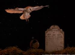barn-owl-copyright-photographers-on-safari-com-8849