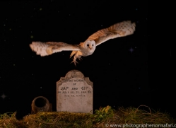 barn-owl-copyright-photographers-on-safari-com-8851