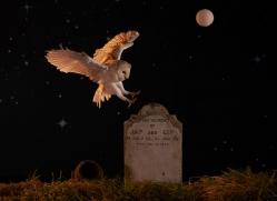 barn-owl-copyright-photographers-on-safari-com-8857