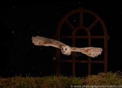 barn-owl-copyright-photographers-on-safari-com-8861