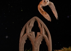 barn-owl-copyright-photographers-on-safari-com-8864