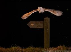 barn-owl-copyright-photographers-on-safari-com-8869