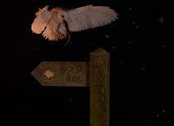 barn-owl-copyright-photographers-on-safari-com-8870