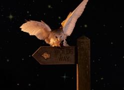 barn-owl-copyright-photographers-on-safari-com-8876