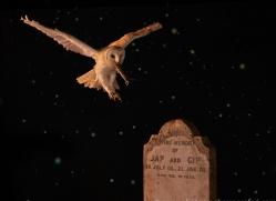 barn-owl-copyright-photographers-on-safari-com-8880