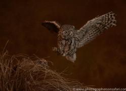 little-owl-copyright-photographers-on-safari-com-8764