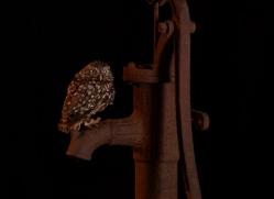 little-owl-copyright-photographers-on-safari-com-8916