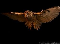 long-eared-owl-copyright-photographers-on-safari-com-8778