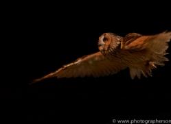 long-eared-owl-copyright-photographers-on-safari-com-8781