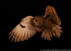 long-eared-owl-copyright-photographers-on-safari-com-8782