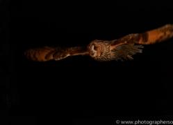 long-eared-owl-copyright-photographers-on-safari-com-8788