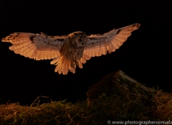 long-eared-owl-copyright-photographers-on-safari-com-8922