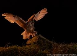 long-eared-owl-copyright-photographers-on-safari-com-8923
