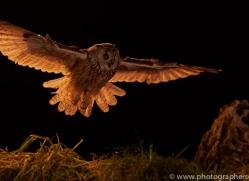 long-eared-owl-copyright-photographers-on-safari-com-8925