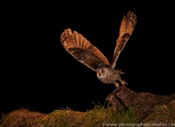 long-eared-owl-copyright-photographers-on-safari-com-8932