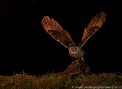 long-eared-owl-copyright-photographers-on-safari-com-8939