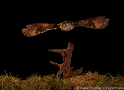 long-eared-owl-copyright-photographers-on-safari-com-8945