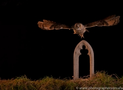 long-eared-owl-copyright-photographers-on-safari-com-8949