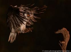 scopps-owl-copyright-photographers-on-safari-com-8952