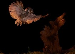 scopps-owl-copyright-photographers-on-safari-com-8956