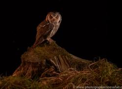 scopps-owl-copyright-photographers-on-safari-com-8957