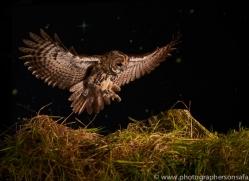 tawny-owl-copyright-photographers-on-safari-com-8958