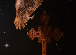 tawny-owl-copyright-photographers-on-safari-com-8963