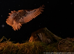 tawny-owl-copyright-photographers-on-safari-com-8966