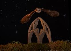 tawny-owl-copyright-photographers-on-safari-com-8973