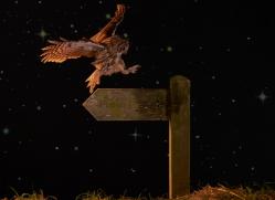 tawny-owl-copyright-photographers-on-safari-com-8978