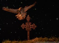 tawny-owl-copyright-photographers-on-safari-com-8979