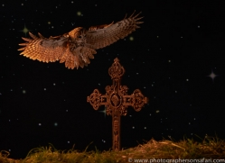 tawny-owl-copyright-photographers-on-safari-com-8981
