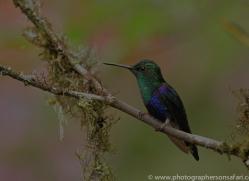 Hummingbird 2015-10copyright-photographers-on-safari-com