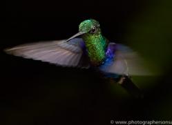 Hummingbird 2015-24copyright-photographers-on-safari-com