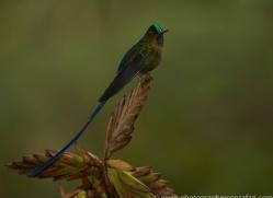 Hummingbird 2015-2copyright-photographers-on-safari-com
