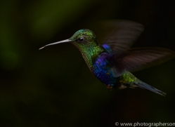 Hummingbird 2015-32copyright-photographers-on-safari-com